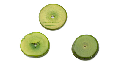 tagua disque environ 20mm vert olive clair  x1pc
